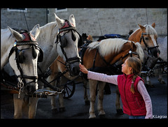 First contact (Kader Lagraa) Tags: old trip travel pink light portrait horse brown white streets girl beautiful beauty wearing true look walking children photography austria see town photo kid amazing nikon photographie hand image small touch transport innocent first calm blonde contact 28 300 moment quite nikkor capture pure fille far share vr petite discover 28300 kader hesitating caleche authentique abdelkader cheveau d700 lagraa klagraa
