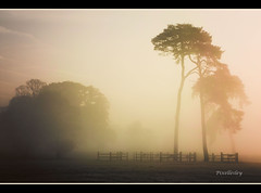 Quiet and Still (pixellesley) Tags: trees light mist beautiful field fence dawn quiet norfolk dew looming magicunicornverybest magicunicornmasterpiece