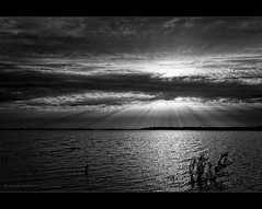 Atardecer de Otoo (Javier Martinez de la Ossa) Tags: bw espaa sol lago sevilla andaluca spain agua nikon seville bn nubes puestadesol laguna andalusia espagne ocaso reflejos rayosdesol siviglia parquenatural dehesadeabajo cotodedoana d700 nikond700 mygearandme mygearandmepremium mygearandmebronze javiermartinezdelaossa mygearandmeplatinum blinkagain tplringexcellence bestofblinkwinners blinkagainsuperstars flickrstruereflection1 flickrstruereflection3 flickrstruereflection4 flickrstruereflection5 flickrstruereflection6 flickrstruereflection7 eltringexcellence flickrstruereflectionexcellence rememberthatmomentlevel1 rememberthatmomentlevel2