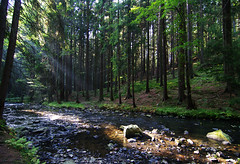 At Doubrava river (Gregor  Samsa) Tags: wood light forest river highlands czech illumination valley czechrepublic naturalreserve vysoina esko eskrepublika vysocina doubrava eskomoravskvrchovina doldoubravy udolidoubravy doldoubravky