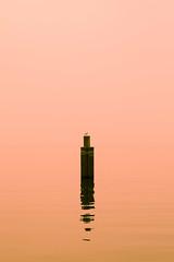 Gabbiano solitario (Frammenti di luce) Tags: orange lake lago garda seagull palo gabbiano arancione tamron287528 canon7d