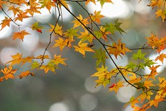 (nobuflickr) Tags: nature japan kyoto autumncolors         kyotoimperialpalace