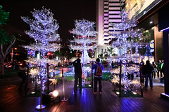 Glowing Trees (wsifrancis) Tags: christmas winter taiwan taipei       xinyi  2011