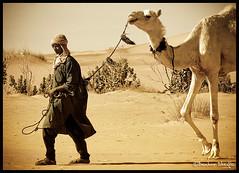 Camels Shepard ! (Bashar Shglila) Tags: sahara niger desert libya camels shepard libyan ghat جمال راعي صحراء ليبيا ابل غات mygearandme mygearandmepremium mygearandmebronze mygearandmesilver mygearandmegold mygearandmeplatinum mygearandmediamond ringexcellence dblringexcellence tplringexcellence eltringexcellence