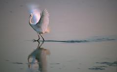 059200108cervia010 (GIALLO1963) Tags: italy birds pentecoste magiclight
