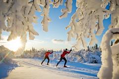Langrenn i Trysil (Destinasjon Trysil) Tags: skating trysil langrenn skyting trysilfjellet skistar langrennburs