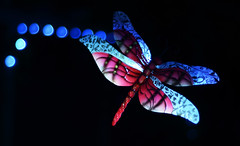Dragon Fly (Eyersh) Tags: lights dragonfly bokeh nikond7000
