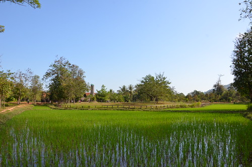Rice field ©  Still ePsiLoN