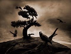 The Seven Raven (h.koppdelaney) Tags: life cliff tree art birds digital photoshop dark view symbol brothers gothic picture philosophy seven soul underworld metaphor raven psyche symbolism psychology mrchen archetype grimm koppdelaney