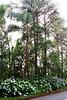 72374_TADEU NASCIMENTO_ESTRADA GRACIOSA PARANA (Tadeu_Nascimento) Tags: paraná água brasil natureza estrada curitiba neblina rios árvores flôres estradadagraciosa hortências tadeunascimento