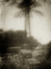 a pretend past (thegoreyend) Tags: sepia blurry blurred palmtree textured digitalpinhole texturized elementsorganizer texture197bylenabemanna