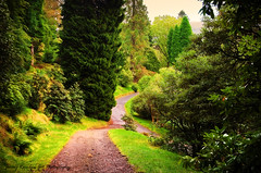 Pleasant Path. Benmore Botanical Garden, Scotland  (Explored) (Jenny Rainbow) Tags: road wood trees tree green nature beauty forest garden scotland nikon path fineart explore botanicalgarden fineartphotography d300 benmore explored benmorebotanicalgarden nikon1685mm jennyrainbow jennyrainbowartphotography