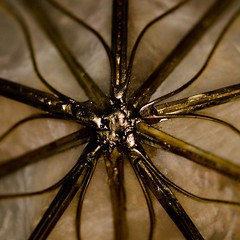 Inspiration (Lynn McFulton) Tags: macro star shell christmastree abalone 3652012 2010yip
