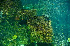 IMG_8910_1 (mert alp ztrk) Tags: ocean life sea fish nature water silhouette coral kids children wonder zoo aquarium shark amazing natural under cities twin istanbul trail tropical reef poseidon tropics bule tang atlantik arapaima akvaryum florya balk tropik istanbulaquarium istanbulakvaryum svey istabulakvaryum