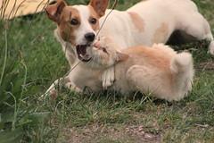 Amigos de verdad (Cari Meier) Tags: chile naturaleza cat perro gato animales mascota perrita perra