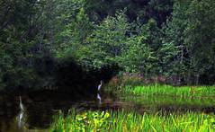Pond on Cape Cod (ladygarbanzo) Tags: blinkagain musictomyeyeslevel1