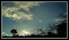 Cu e Terra  <<<>>>  Heaven and Earth (Opimentas) Tags: trees sunset sky cloud sun tree sol nature brasil angel clouds landscape march flickr janeiro tag natureza go january sunsets tags paisagem prdosol wikipedia arvore arvores nuvem abs ops goinia gois entardecer maro wikimedia gyn talita 2013 wikipdia onofrepimenta wikimdia opimentas oltusfotos bhto