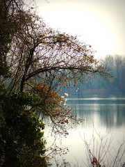 mattino Gennaio su un Bacino SILE, controluce (aldofurlanetto) Tags: controluce bacino fogliegialle batuffoli
