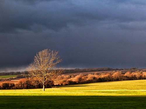 Sunshine highlights a tree against rainc by Anguskirk, on Flickr