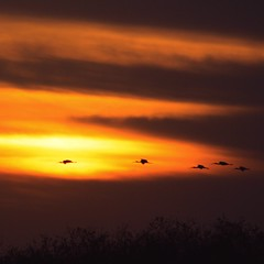 ~ Sleek Black Bullet ~ (PelicanPete) Tags: sunset color nature beauty unitedstates natural florida dramatic everglades drama cloudscape floridaeverglades southflorida palmbeachcounty boyntonbeachflorida
