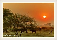sunset (TARIQ HAMEED SULEMANI) Tags: sunset evening tariq concordians sulemani jahanian