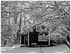 Vinterns vackraste dag ~ The most beautiful day this winter (LellePelle) Tags: winter bw house snow tree vinter sweden småland sverige snö hus träd freshsnow svartvitt nysnö