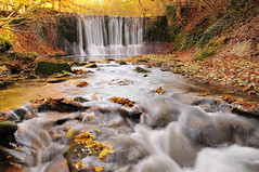 The Fall (Juan Rubiano) Tags: original paisajes color colour nature water yellow relax schweiz switzerland landscapes nikon colorful europa europe suisse suiza swiss perspective colores eldorado otoo colourful d300 naturesfinest rubiano perspectivas autumnphotos supershot withoutphotoshop topshots sinphotoshop sinretoques embrach withoutedition autumnineurope photosandcalendar sinedicin emptyplanet worldwidelandscapes natureselegantshots withoutretouching sinhdr rainforestink withouthdr yourwonderland leuropepittoresque purafotografa photopure juanrubiano wwwjuanrubianocom