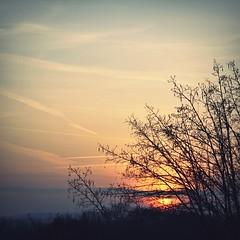 (ms holmes) Tags: sunset sky tree silhouette square soft mood sonnenuntergang pastel branches himmel atmosphere äste baum stimmung quadratisch canoneos1000d