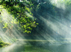Let There Be Light (osvaldoeaf) Tags: light brazil sun tree green nature water leaves america reflections ray branches south beam vegetation goiânia goiás micarttttworldphotographyawards micartttt michaelchee