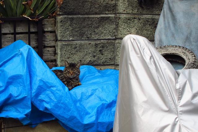 Today's Cat@2012-02-05