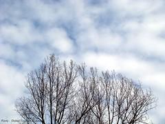 de lucht  van twee kanten  afgelopen zondag  /  the air  of two sides  last Sunday (2) (dietmut) Tags: sky rotterdam nederland thenetherlands wolken lucht hemel sonycybershot 2012 zuidholland hoogvliet zalmplaat sonydsct200 dietmut februarifebruary