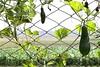 "Window (HamimCHOWDHURY  [Read my profile before you fol) Tags: life pink blue red portrait white black green nature yellow canon eos colorful purple faces sony gray magenta violet surreal ash dhaka dslr vaio rgb bangladesh manikgonj 60d 595036 ""framebangladesh"" ""incrediblebengal"" gettyimagesbangladeshq12012"