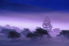 purple romance