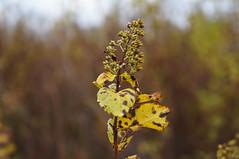 Serenity (Tk_White) Tags: plant fall nature newfoundland sony stjohns 1855mm nex 5n