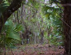 Florida Woods (Alida's Photos) Tags: trees florida stuart vegetation halpatiokeepark