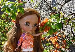 Enjoying the Quince Blooms... (Bebopgirl1969) Tags: blythe quince manuhealiiparadisegirl