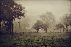 thoughts (silviaON) Tags: november trees mist field fog landscape cows powerline textured 2011 memoriesbook bsactions artistictreasurechest skeletalmess visionqualitygroup alledgesactions