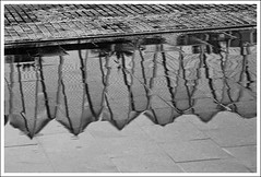 (The New Motive Power) Tags: canond60 spain valencia city arts sciences culture architecture modernist futuristic turia santiagocalatrava modern park sculpture urban overcast wet rain ciudaddelasartesylasciencias lumbracle reflection floor texture arches shimmer stone inverted blackandwhite cobbles
