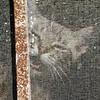 Miauw! let me out please... (Solomulala | mostly weekends ;-( !) Tags: portrait pet cat canon square de kat foto gato 7d poes solomulala ¨muriel murieldejong