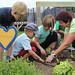 Kinder beim Kräuter pflanzen
