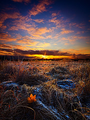First Snow (Phil~Koch) Tags: morning flowers blue autumn winter sunset red portrait orange sun green fall love nature floral field leaves yellow vertical wisconsin clouds sunrise photography landscapes office spring twilight peace seasons earth farm horizon scenic meadow inspired naturallight farmland photograph serene agriculture inspirational nationalgeographic horizons environement summerspring philkoch myhorizonart