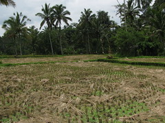Bali 1114 (molaire2) Tags: bali indonesia island indonesie ubud denpasar balinese hindouisme