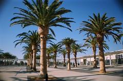 Palm Court #1 (EmperorNorton47) Tags: california plaza film analog palms photo lofi 200asa googleearth irvine kodakgold kodakgold200 greatpark lasardina eltoromarinecorpsairstation