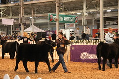 IMG_7408 (Brownfield Ag News) Tags: beef indianapolis congress hoosier