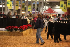 IMG_7417 (Brownfield Ag News) Tags: beef indianapolis congress hoosier
