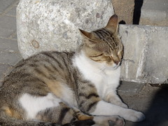 DSC00091 Homeless but not starving. (omersad) Tags: urban cats streets sony moda cybershot istanbul sonyphotographing dschx100v