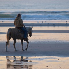 La belle vie **--- ° (Titole) Tags: horse reflection beach friendlychallenges thechallengefactory titole nicolefaton