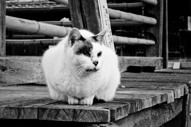 Today's Cat@2011-12-11