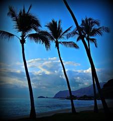 West Coast Oahu #1 (TravelsThruTheUniverse) Tags: hawaii oahu tropicalplants coconutpalms tropicalgardens tropicalfoliage tropicallandscapes blinkagain bestofblinkwinners