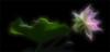 lotus flower fractalius Filter - IMG_9156-frac-1000 (Bahman Farzad) Tags: flower yoga peace lotus relaxing peaceful meditation therapy fractalius
